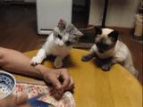 ねぇねぇ、ちょっとそれどんな味?おねだり上手な猫