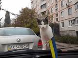 車のワイパーにびっくりする猫のリアクションが神すぎる