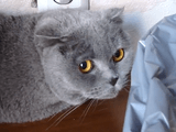 植木鉢をひっくり返したのがバレて「申し訳ない顔」をするニャンコ/Guilty cat