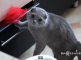 ご、ごめんニャさい・・・。最高に「申し訳ない顔」をする猫