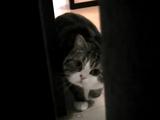 お部屋の色んなところに隠れている飼い主さんを、抜き足・差し足・忍び足で探す猫のまるちゃん