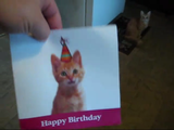 ネコの鳴き声でハッピーバースデーを奏でるカードにキレまくりなネコ