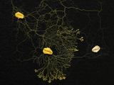 準知的粘菌が人類に教えてくれること