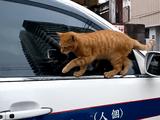 このニャンコ、できる・・・。凄いとこを見せようとして失敗した猫の誤魔化し方があざとすぎる