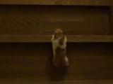 階段を登るハムスターが凄カワイイ