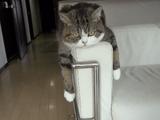世界で一番有名なネコ、まるちゃんの詰め合わせ 第5弾