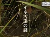 """いまだに解明されないコメの放射能汚染メカニズム/NHK・クローズアップ現代「""""里山""""汚染メカニズムを解明せよ ~福島農業・2年目の模索~」"""