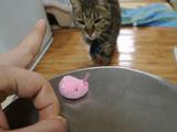 「待てる猫」 と 「待てない猫」