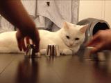 簡単だニャ!とでも言わんばかりに、スリーシェルゲームで当たりを連発する猫