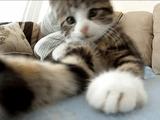 あらぶる子猫がGoProカメラに何度もアタックしてくる胸キュン映像
