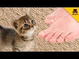 子猫「アカン!アカン!アカン!アカン!」/飼い主さんの足のニオイを嗅いでしまった子猫が【神リアクション】