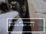 ドラクエ風に子猫を紹介する動画の完成度が高すぎる
