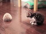 子猫が~、ハリネズミに~、出会った~