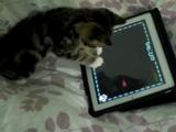 iPadの猫用ゲームで遊ぶ子ネコのかわいさがエンドレス