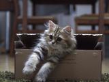 ふぅ・・・。海外メディアで「世界一かわいい」と評され話題を呼んだ子ネコのデイジーちゃん