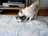 「くすぐられて笑い転げるネコ」というタイトルの動画に思いっきり釣られた件