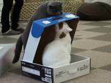 なんて意地悪なんだ!お友達を箱に閉じ込めるドSな黒ネコ