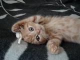 将来の戦いに備えてネコキックの練習をする子猫