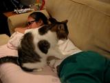腰を徹底的にマッサージしてくれる猫