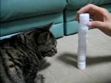 俺vsネコ(積み上げ戦)2回戦