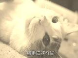 ネコ好きにはたまらない!「猫のミーちゃんのうた」が癒されすぎる
