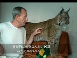 オオヤマネコを飼っている男性「社交的な動物なんだ。凶暴なんて事はないよ。誰にも噛み付いたことがないし、おい止めなさい!なんで耳を噛むんだ!」
