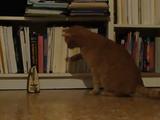 メトロノームに身も心も支配されつつあった猫が、起死回生の猫パンチで事なきを得る