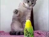 ネコパンチを何度もためらう猫のミカンちゃん