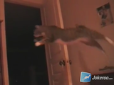明らかにジャンプに失敗したのに、何事も無かったかのように歩き出す猫