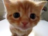 叱られちゃったの・・・。おとなの猫にシャーシャー言われてシュンとなる子猫のももちゃん
