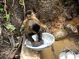 すごい慣れた手つきでお皿を洗うお猿さん