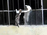 「さあ!早くこっちにおいで!」 保護されていた子猫を母ネコが助けにきた