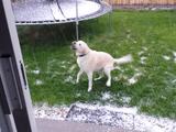 犬「うっひょぉおおおおお!何か空から氷が降ってきたあああああ!食ってやる!食ってやるぞぉおおお!」