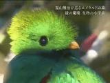 NHKスペシャル <ホットスポット 最後の楽園 season2> 第3回 「緑の魔境 生物の小宇宙 ~中米コスタリカ~」