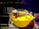 絶っっっ対に、お風呂に入りたくない犬