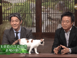テレビ東京の2代目看板ネコ「にゃーにゃ」 が自由すぎる!お堅い政治経済系のニュース番組でも「人懐っこい子猫」がいるだけでみんなデレデレ