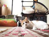 猫に「年の差」なんて関係ない!というのが良く分かる実験映像