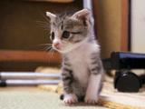 へぇ~!猫ってこんなに早く成長するんだ!子猫の成長を1年間追いかけた、猫の「おはぎ物語」が素敵