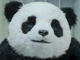 海外のおもしろCM 【キレるパンダ】