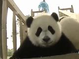 「パンダ」と「滑り台」の相性は抜群