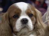犬たちが壊れていく・・・。/BS世界のドキュメンタリー「イギリス 犬たちの悲鳴 ~ブリーディングが引き起こす遺伝病~」