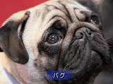 愛犬家から賛否両論の大反響があった告発から3年、犬たちの現実に変化はあったのか?/BS世界のドキュメンタリー「続・犬たちの悲鳴 ~告発から3年~」