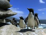 ペンギンの失敗集