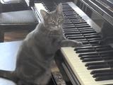 ピアノを弾くネコのノラちゃんと、それを全力で引き立てるためだけに演奏するプロの交響楽団