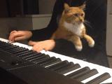 ピアノ演奏を録画する女性 vs ベスポジを探し求める猫