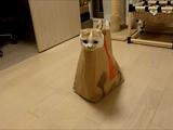 猫のポッケちゃんが「ご一緒にポッケはいかがですか?」攻撃を、猫好きが萌え死ぬまで続けるつもりのようです