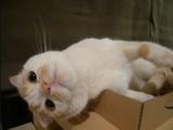 横になりながら首をかしげるもんだから、ほとんど逆さまの状態になってしまう猫のポッケちゃん