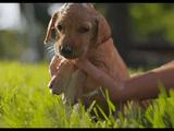 完璧にカワイイ子犬を、完璧に美しい超高解像度で。