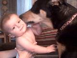 人間の赤ちゃんが好き過ぎてペロペロと舐めまくる犬と、とっても嬉しそうな赤ちゃん