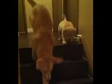 【ほっこり癒され動画】 怖くて階段が降りれない子犬に、何度も降り方をレクチャーしてあげる優しい犬
